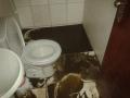 Desentupidora de Vasos Sanitários - (11) 4451-0933